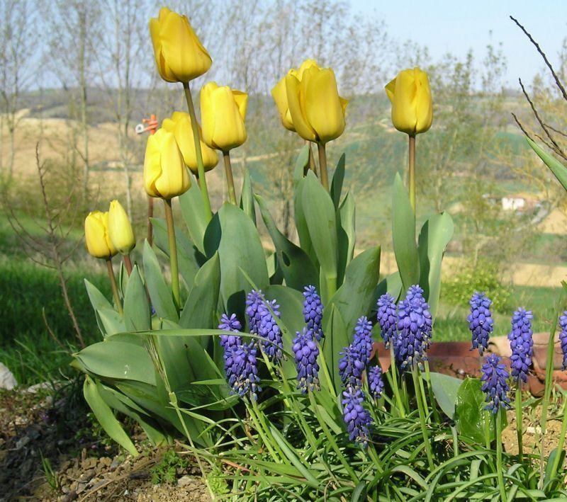 19 avril dans le jardin voisin - Mon voisin fait du feu dans son jardin ...